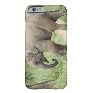 Baby Elephant following the mother,Corbett Barely There iPhone 6 Case