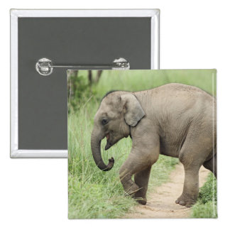 Baby Elephant following the mother,Corbett Button