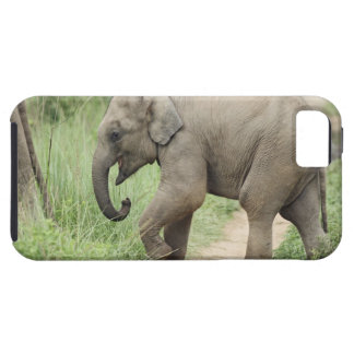 Baby Elephant following the mother,Corbett iPhone SE/5/5s Case