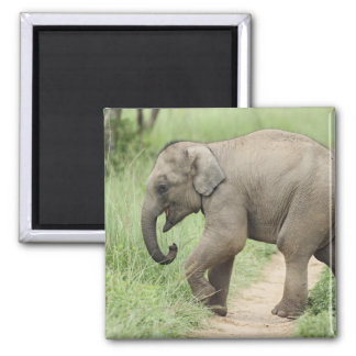 Baby Elephant following the mother,Corbett Magnet