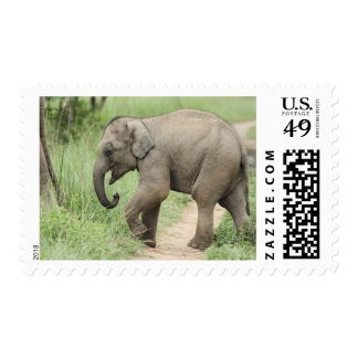 Baby Elephant following the mother,Corbett Stamp