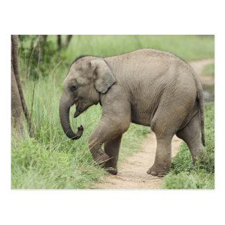 Baby Elephant following the mother,Corbett Postcard