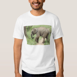 Baby Elephant following the mother,Corbett Shirt