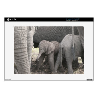 """Baby elephant is standing and wobbly 15"""" laptop decal"""