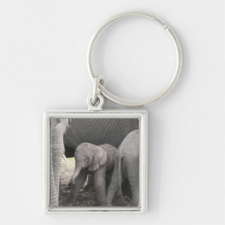 Baby elephant is standing and wobbly keychain