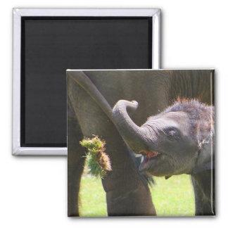 Baby elephant magnet