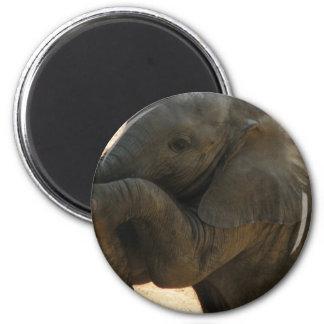 Baby Elephant Magnet Refrigerator Magnet