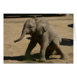 baby elephant note card