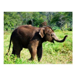 Baby Elephant Postcard