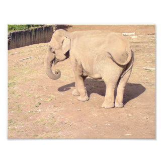 Baby Elephant Print 10x8.5 Photo Print