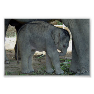Baby Elephant Print