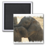 Baby Elephant Square Magnet Magnet