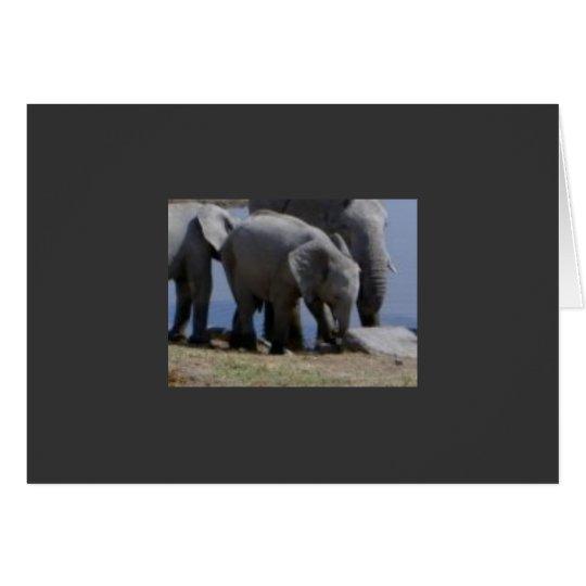 Baby Elephant Walk Card