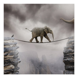 Baby elephant walks tightrope across big gorge. poster