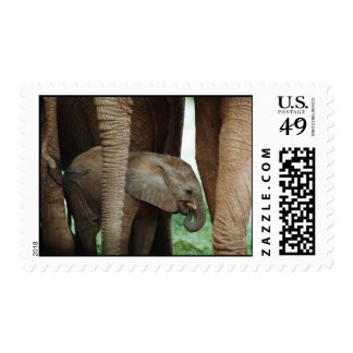 Baby Elephant with Its Mother Postage