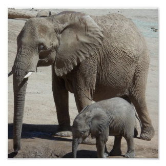 Baby Elephant with Mommy Poster