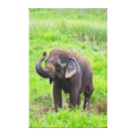 Baby Elephant Wrapped Canvas Gallery Wrapped Canvas