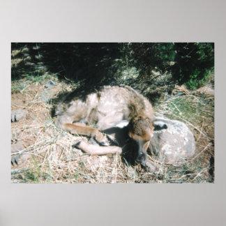 Baby Elk Print