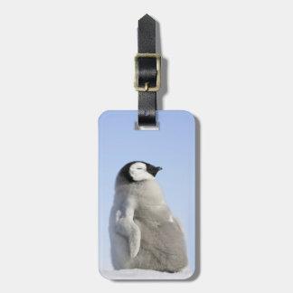 Baby Emperor Penguin, Snow Hill Island Bag Tag