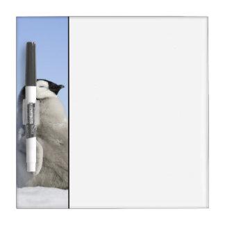 Baby Emperor Penguin, Snow Hill Island Dry Erase Board