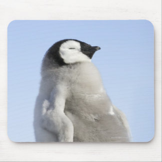 Baby Emperor Penguin, Snow Hill Island Mouse Pad