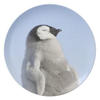 Baby Emperor Penguin, Snow Hill Island Dinner Plates