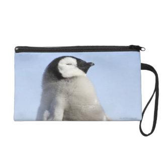 Baby Emperor Penguin, Snow Hill Island Wristlet