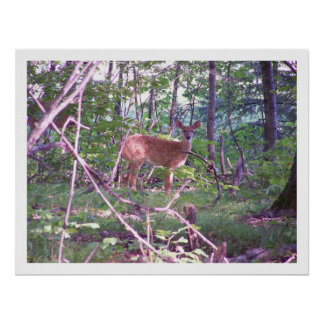 Baby Fawn Deer Art Print Poster