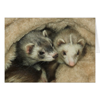 Baby Ferrets-Hobs and Jills Greeting Card