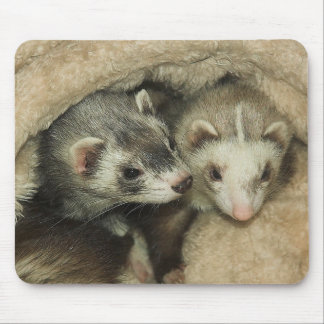 Baby Ferrets Hobs and Jills Mouse Pad