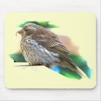 Baby Finch Bird Mouse Pad