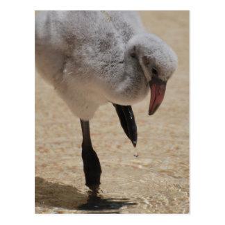 Baby Flamingo  Postcard