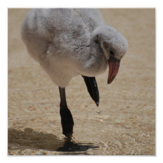 Baby Flamingo Poster