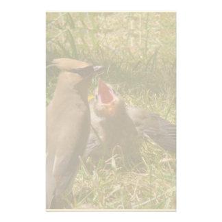 Baby Fledgling Cedar Waxwing Bird Animals Wildlife Stationery
