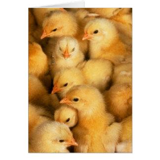 Baby Fluffy Chicks Greeting Card