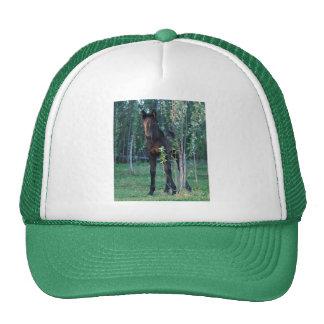 Baby foal and poplar sapling mesh hat