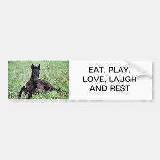 Baby foal lying in the meadow car bumper sticker