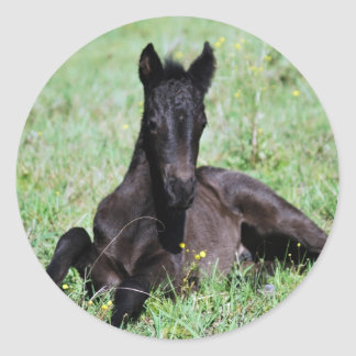 Baby foal lying in the meadow classic round sticker