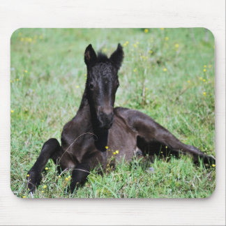 Baby foal lying in the meadow mouse pad