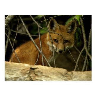 baby fox by hole postcard