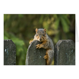Baby Fox Squirrel Card