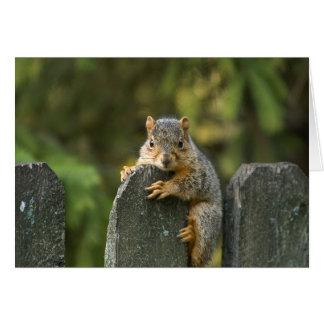 Baby Fox Squirrel Card