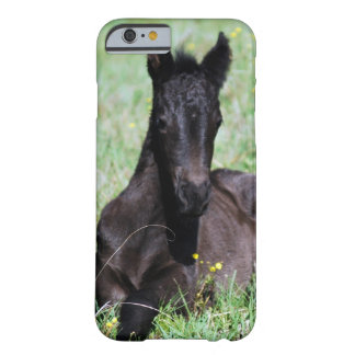 Baby friesian foal lying down barely there iPhone 6 case