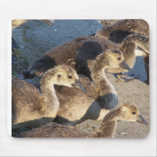Baby Geese Mousepad