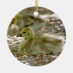 Baby Geese on a Bed of Roses Ceramic Ornament