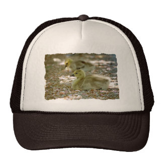 Baby Geese on a Bed of Roses Trucker Hat