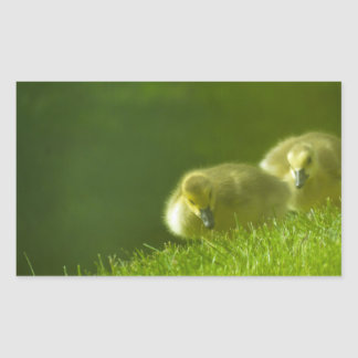 Baby Geese Rectangular Sticker