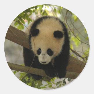 baby-giant-panda10x10 round sticker