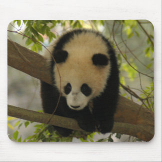 baby-giant-panda10x10 alfombrilla de raton