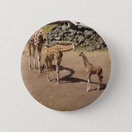 Baby Giraffe and Giraffe Family Button